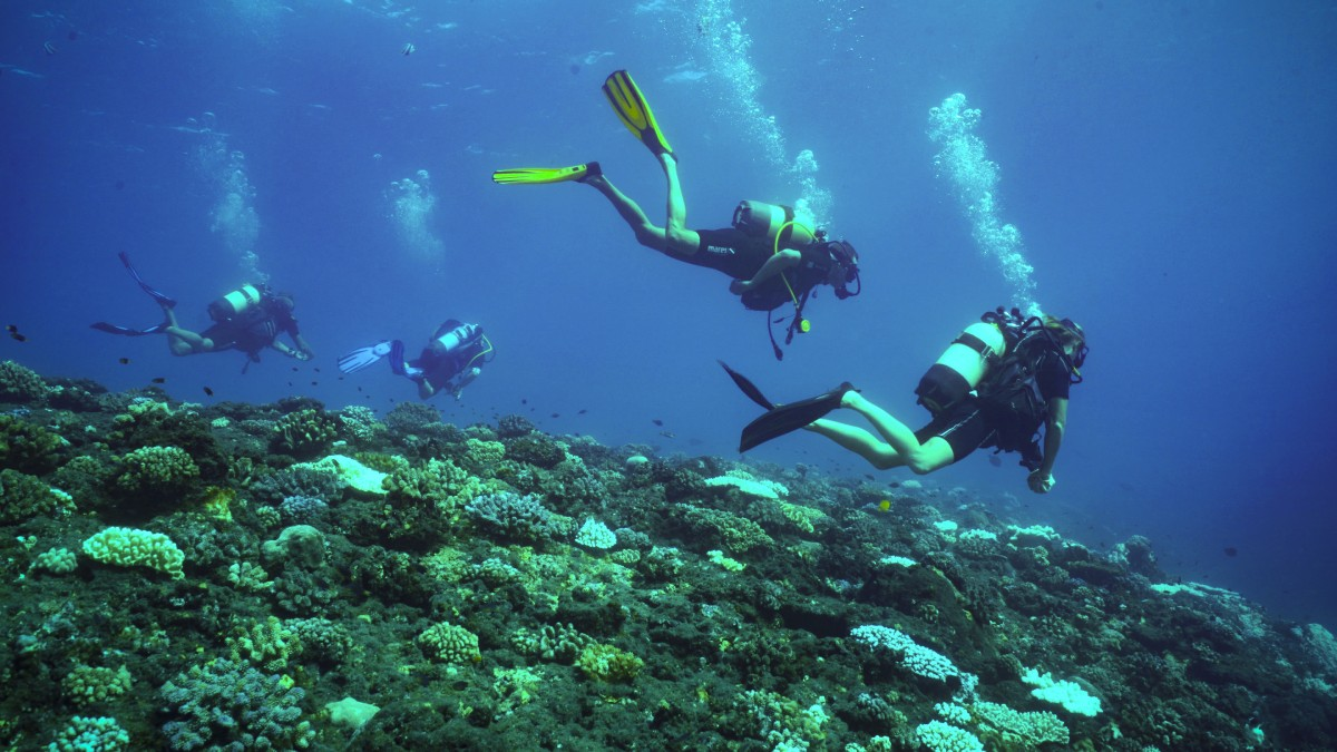 Plongée Salée - Alt image