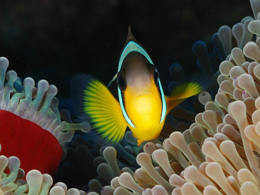 Aquabulle Plongée - Alt image