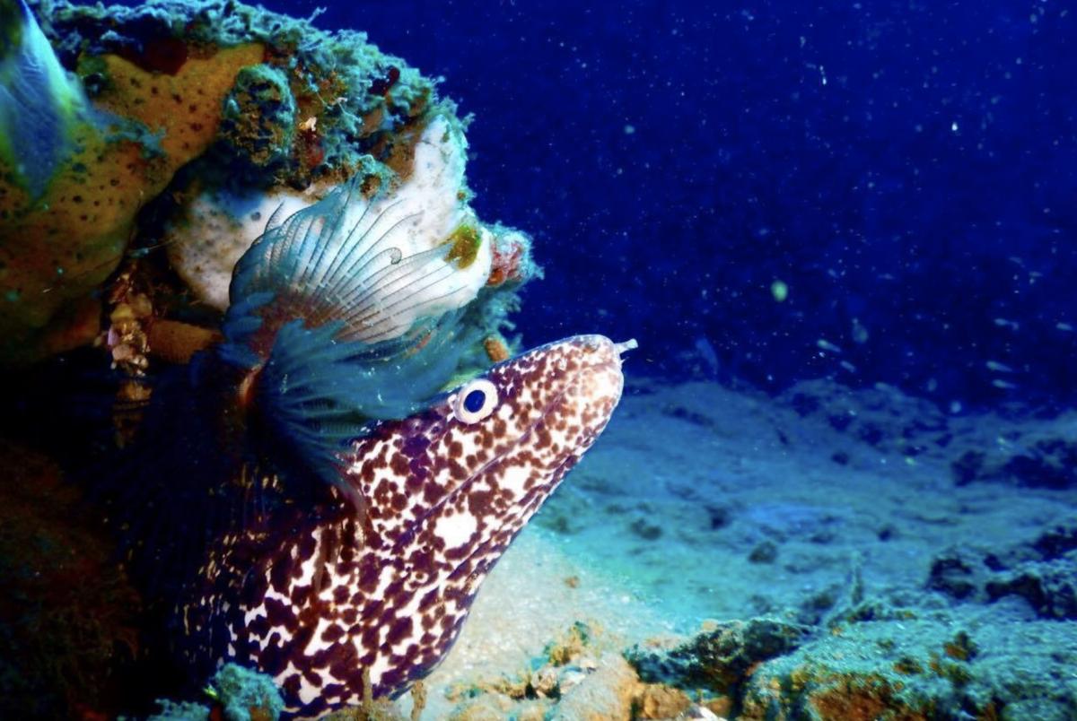 Infini Plongée Guadeloupe - Alt image