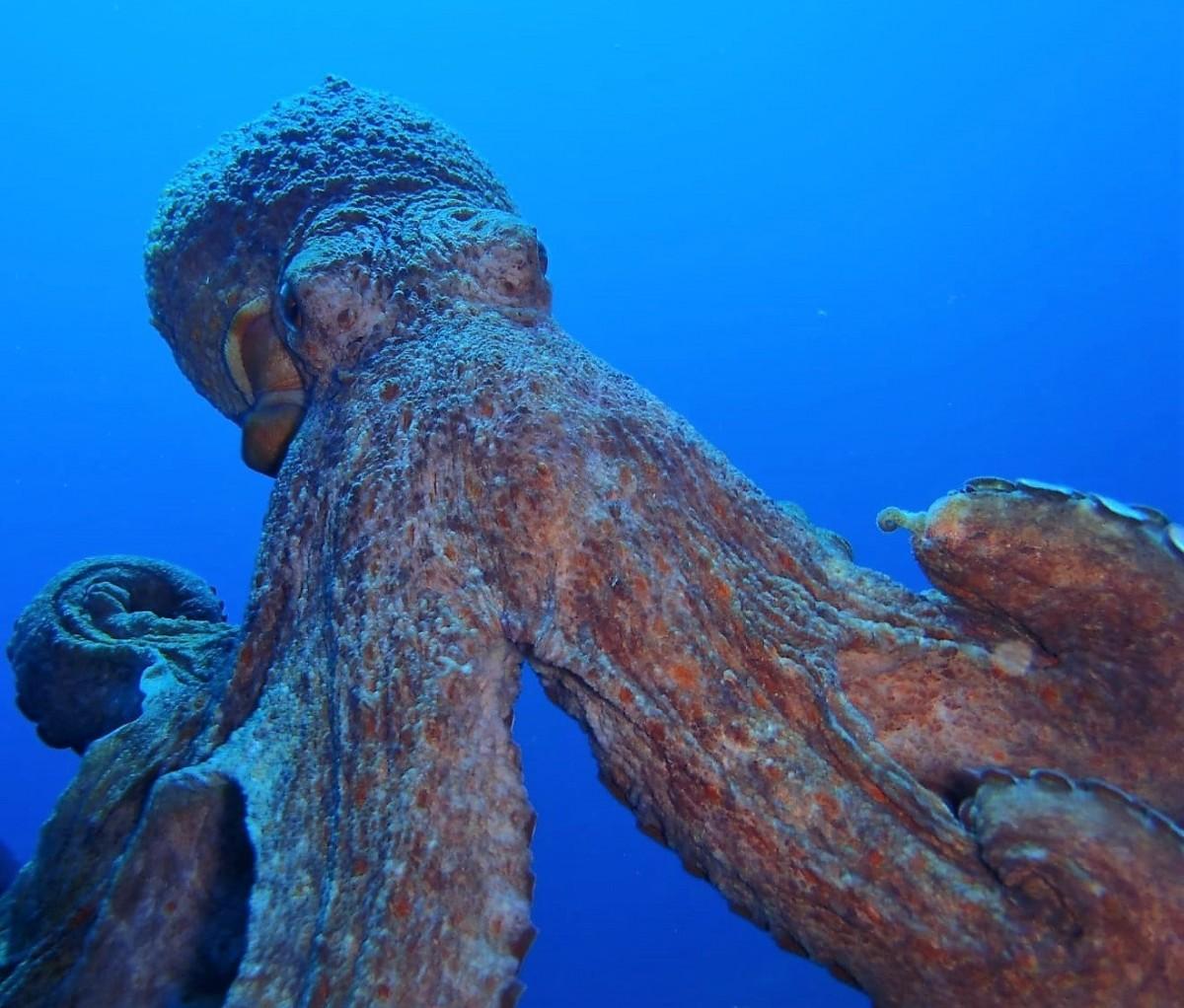 Diving Center Fornells - alt_image_gallery