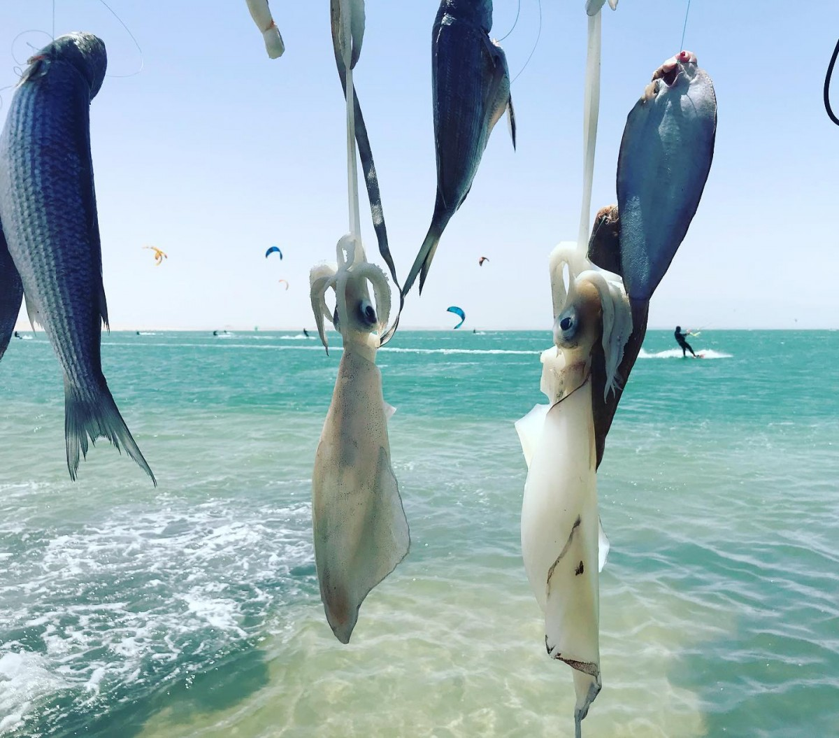 Dakhla Discovery - alt_image_gallery