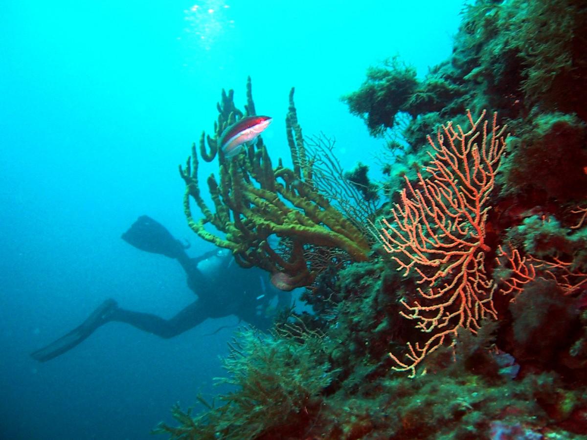 Le Poseidon - Plongée à Nice - alt_image_gallery